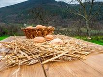 Canestro delle uova fresche, cotto di recente dalla gabbia di pollo, su un bordo di legno all'aperto nella campagna nel legno den fotografia stock