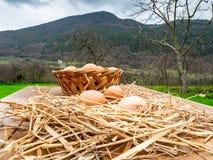 Canestro delle uova fresche, cotto di recente dalla gabbia di pollo, su un bordo di legno fotografie stock
