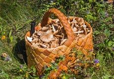 Canestro di Birchbark in pieno dei funghi Immagine Stock