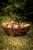 Canestro di Brown in pieno dei funghi della foresta Immagini Stock Libere da Diritti
