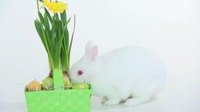 Canestro di fiuto del coniglietto di pasqua delle uova e dei narcisi archivi video