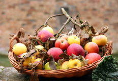 Canestro di frutta Fotografia Stock