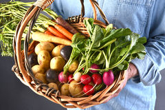 Canestro di Holding Organic Vegetable dell'agricoltore Immagine Stock Libera da Diritti