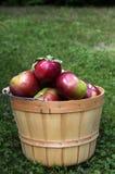 Canestro di legno con le mele rosse di Macintosh su fondo verde con lo spazio della copia immagini stock libere da diritti