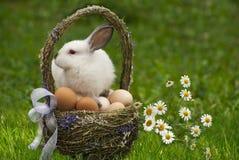 Canestro di Pasqua ed il coniglietto di pasqua immagine stock libera da diritti