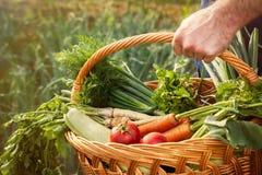 Canestro di trasporto dell'agricoltore con le verdure organiche Fotografia Stock