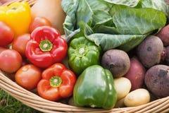 Canestro di veg organico fresco Fotografia Stock