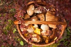 Canestro di vimini con Forest Edible Mushrooms Immagine Stock Libera da Diritti
