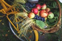 Canestro di vimini con frutta su una bici gialla dei pantaloni a vita bassa, picnic di autunno in natura con una dieta sana Immagini Stock