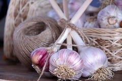 Canestro di vimini dell'aglio fresco del raccolto e una bobina della corda Fotografia Stock Libera da Diritti
