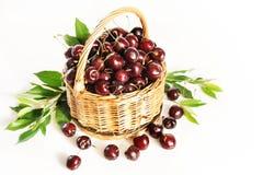 Canestro di vimini in pieno della ciliegia rossa matura Fotografie Stock
