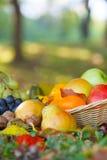 Canestro di vimini in pieno della frutta di autunno Fotografia Stock Libera da Diritti