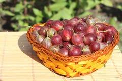 Canestro di Wattled con un'uva spina Fotografie Stock