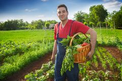 Canestro felice della tenuta del famer con le verdure Immagine Stock