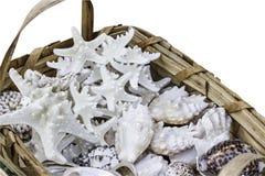 Canestro intrecciato della paglia in pieno delle stelle marine e delle coperture, isolato su bianco. Immagine Stock