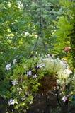 Canestro ornamentale d'attaccatura Fotografia Stock