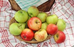 Canestro in pieno delle mele del giardino Fotografia Stock