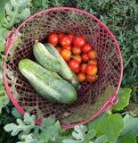 Canestro in pieno delle verdure selezionate fresche fotografia stock libera da diritti