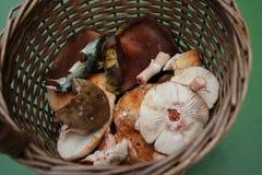 Canestro in pieno di vari funghi commestibili selvaggi freschi in un'erba Immagine Stock
