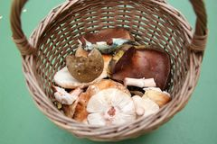 Canestro in pieno di vari funghi commestibili selvaggi freschi in un'erba Fotografia Stock