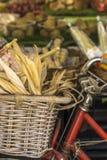 Canestro su una bicicletta con paglia ed aglio fotografia stock libera da diritti