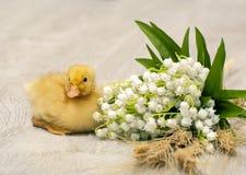 Caneton de Pâques Photos stock