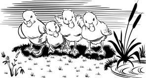Canetons dans l'herbe illustration libre de droits