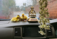 Canetons de Pâques dans la voiture Photos libres de droits
