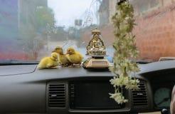 Canetons de Pâques dans la voiture Photo stock