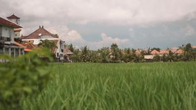 Canggu rice field bordered by houses. Canggu green flat rice field bordered by white houses with orange tile roofs in Bali, Indonesia. Shot with Sony a7s on stock video footage