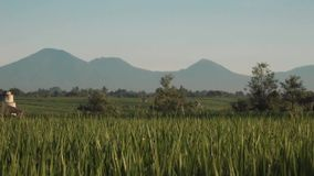 Canggu rice field with Mount Batur volcano in background. Green rice fields with dew, trees and Mountain Batur volcano silhouette in background. Shot with Sony stock footage