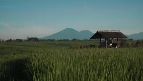 Canggu rice field with Mount Batur volcano in background. Green rice fields terraces with trees, small shed and Mountain Batur volcano silhouette in background stock footage