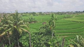 Canggu Rice Fields Panorama Indonesia Aerial 4k. 4k aerial footage of a rice field on Bali, Indonesia stock video footage