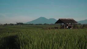 Canggu risfält med den monteringsBatur vulkan i bakgrund arkivfilmer
