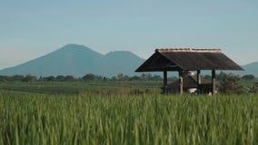 Canggu ryż pole z góry Batur wulkanem w tle zdjęcie wideo