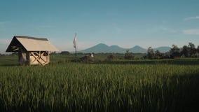 Canggupadieveld met de vulkaan van Onderstelbatur op achtergrond stock video