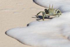 Cangrejo Foto de archivo libre de regalías