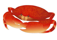 Cangrejo stock de ilustración