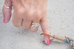 Cangrejo azul de la garra que pellizca un dedo Imagen de archivo