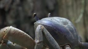 Cangrejo, crustáceo, criaturas del mar, animales almacen de video