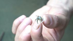 Cangrejo de ermitaño del holdind del hombre con la cáscara blanca en su cierre de la mano para arriba, macro salvaje de la natura almacen de metraje de vídeo
