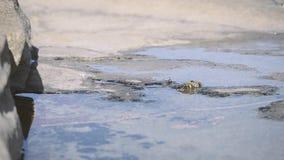 Cangrejo de ermitaño en el agua metrajes