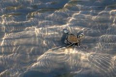 Cangrejo de ermitaño en la arena debajo de una agua de mar baja con el refl de la luz del sol Foto de archivo
