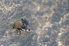 Cangrejo de ermitaño en la arena debajo de una agua de mar baja con el refl de la luz del sol Fotos de archivo