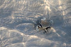 Cangrejo de ermitaño en la arena debajo de una agua de mar baja con el refl de la luz del sol Imagen de archivo libre de regalías