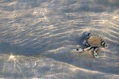 Cangrejo de ermitaño en la arena debajo de una agua de mar baja con el refl de la luz del sol Imágenes de archivo libres de regalías