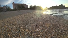 Cangrejo de ermitaño en la isla de Miyako, Okinawa, Japón almacen de video