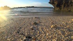 Cangrejo de ermitaño en la isla de Miyako, Okinawa, Japón almacen de metraje de vídeo