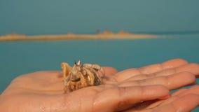 Cangrejo de ermitaño en la palma de su mano almacen de video