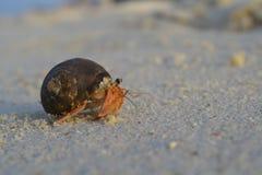 Cangrejo de ermitaño en la playa Foto de archivo